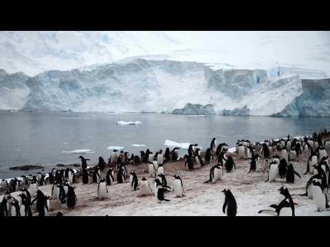 Antarctica Cruise Neko Harbour