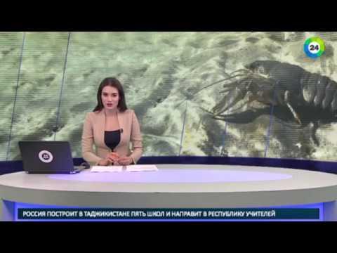 Специалисты с клешнями: Водоканал Петербурга принял на работу раков МИР24