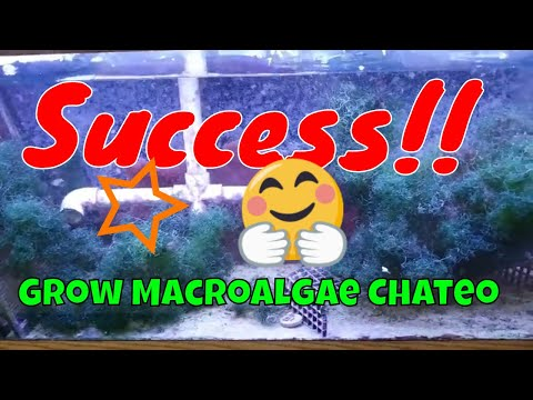 The Perfect Refugium And Fish Choose Your Macro Algae Wisely SETUP For SUCCESS