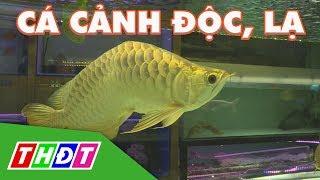 Điểm danh những loại cá cảnh độc, lạ nhất hiện nay | THDT