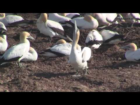 West Coast National Park and Cape Gannet colony in Lambert's Bay, South Africa