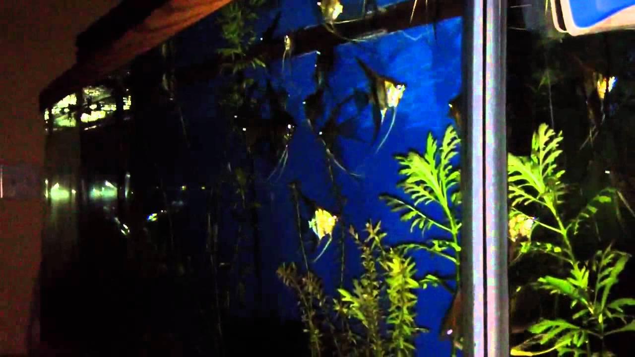 Arduino controlled aquarium youtube
