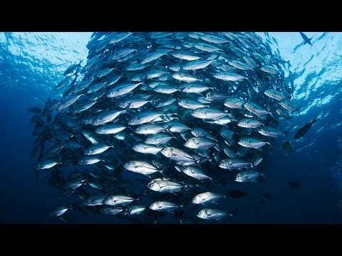 Jackie Savitz: Save the oceans, feed the world!