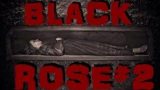 видео Роза Black Forest Rose