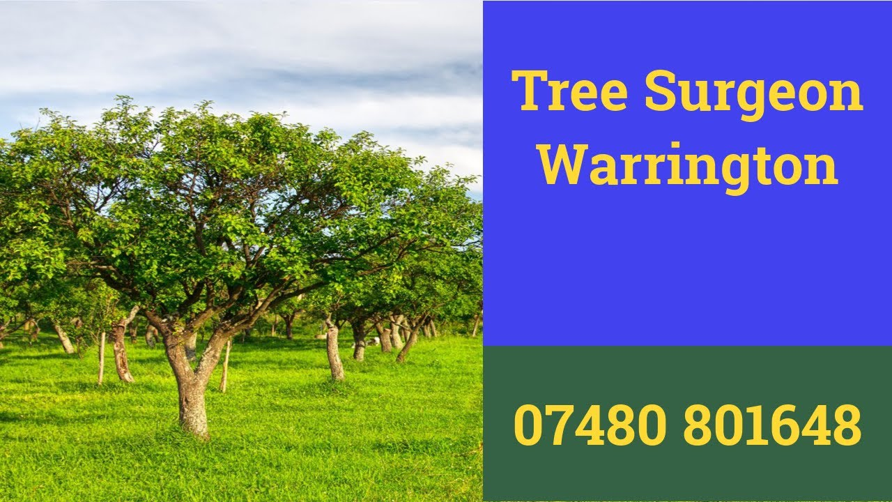 Tree Surgeon Warrington Root And Stump Removal Tree