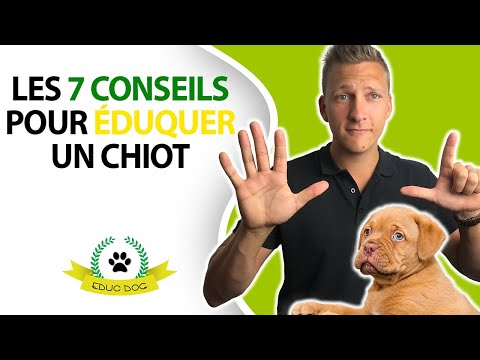 Grillage Chien - 10 techniques à savoir - Éducateur canin - 15 minutes par jour