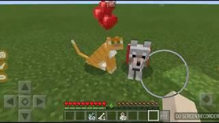 Як приручити і назвати кота і собаку.