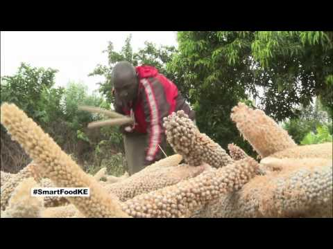 Kenyan farmers reap benefits from growing drought tolerant crops