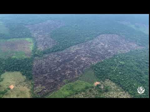 Deforestación 2019-2020