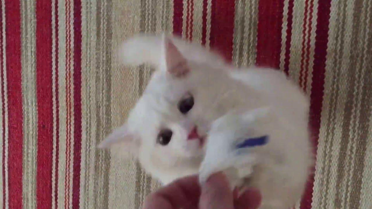 Kedilerin Eğitiminde Nelere Dikkat Edilir