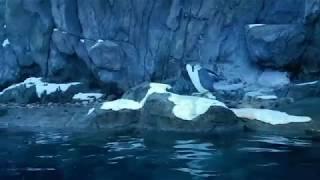 Penquin Swan dive