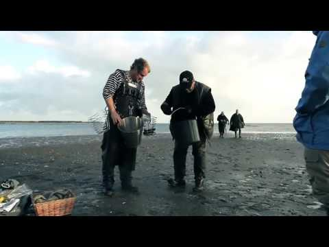 Oyster Safari - SW Denmark - National Park and World Heritage Wadden Sea