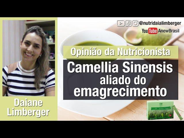 Camellia Sinensis: aliado do emagrecimento - Nutri Daiane Limberger