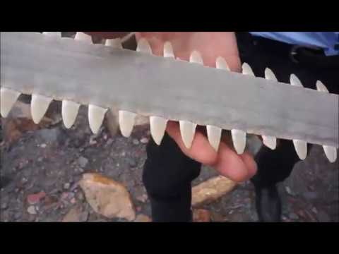 Using 3D Models To Understand The Sawfish