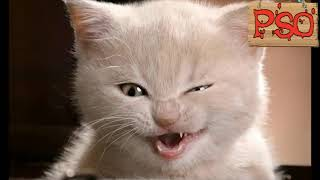 Смешные коты #2 / Видео