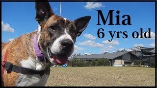 Mia - Adopt In Brisbane