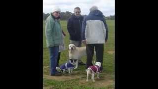 Werribee Obedience Dog Club Funday Aug 2010