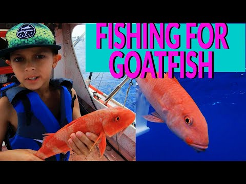 REEF BOTTOM FISHING Off Oahu For GOATFISH And Other FISH -TAGGING Goatfish In Hawaii