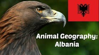 ANIMAL GEOGRAPHY: ALBANIA