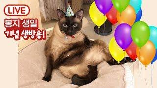 [18.03.15 라이브] 축! 봉지의 7번째 생일! 봉이장군 생일파티 놀러와요