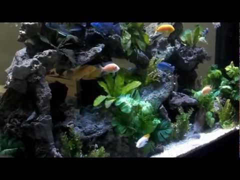 700 Gallon African Cichlid Tank Suspended from the ceiling