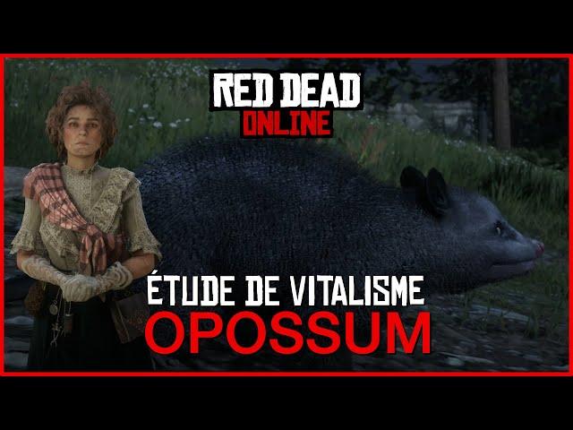 [GUIDE] Se transformer en opossum avec l'étude de vitalisme • Red Dead Online