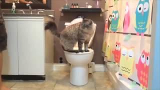 Train Your Cat to Use Toilet in Days ! درب قطك كيف يستعمل المرحاض