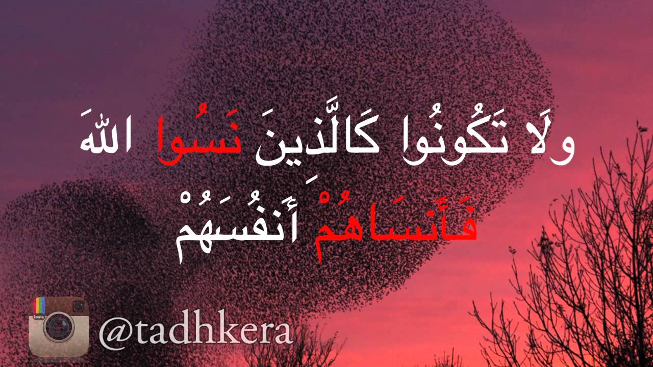 قران بصوت منصور السالمي
