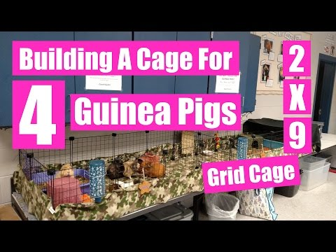 Building A Cage For 4 Guinea Pigs