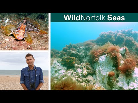 WildNorfolk Living Seas
