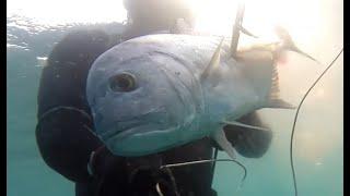 Spearfishing Indian Ocean November 2019 Подводная охота ноябрь 2019