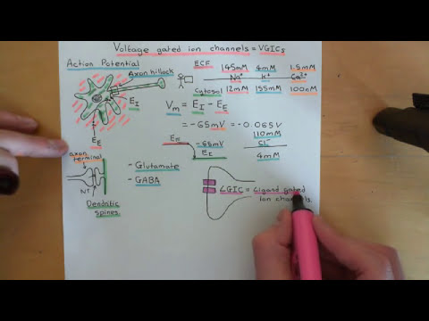Voltage Gated Ion Channels Part 1