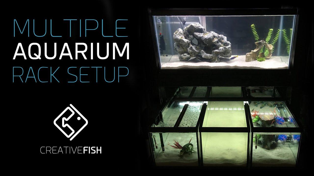 The Diy Multiple Aquarium Rack Is Complete