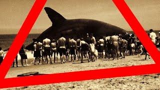 ★ MEGALODON / der WELTWEIT GRÖßTE HAI, gefunden und gefangen?! (Süd Australien, circa 1970.)