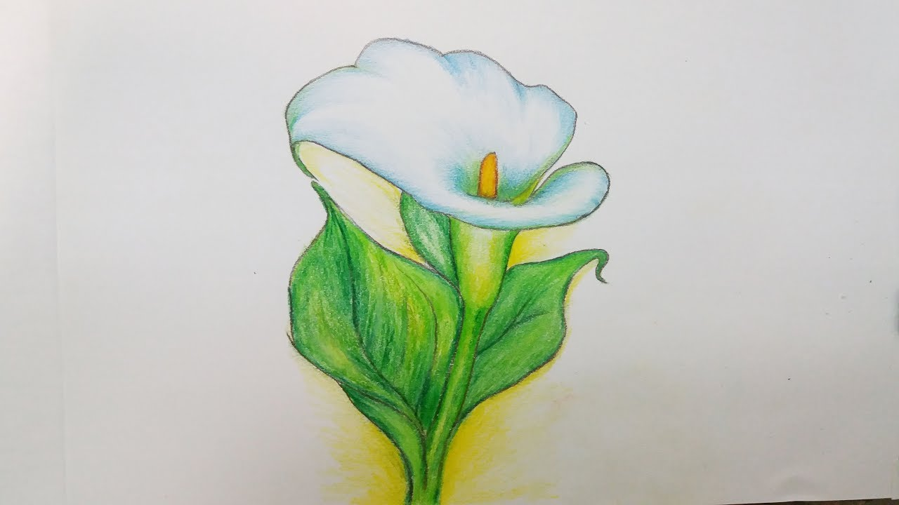 How To Draw Calla Lily Flower Step By Step Youtube