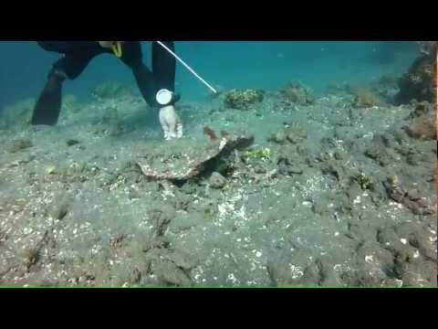 Mantis Shrimp - Japanese Shipwreck, Amed, Bali (12m) - GoPro HD Hero2