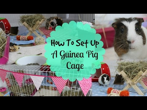 How To: SET UP A GUINEA PIG CAGE   Hamster HorsesandCats