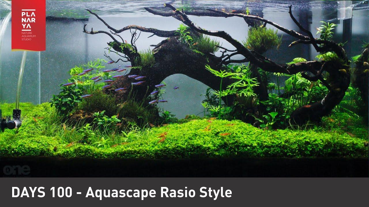 Aquascape Rasio Style Day 100 Youtube