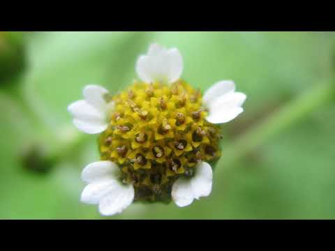 Лето/ природа/ цветы/ небо/nature/ Samer/ Flower /sky Premiere Pro переходы