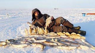 КИЛЛОГРАМОВЫЕ ОКУНЯ и ЩУКИ ТОРПЕДЫ ШИКАРНАЯ рыбалка на жерлицы ПОПАЛИ НА ЖОР Заповедник
