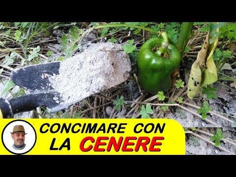 CONCIMARE CON LA CENERE