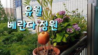 하이디의하루(Vlog)/베란다정원/직박구리/사과먹방/유…