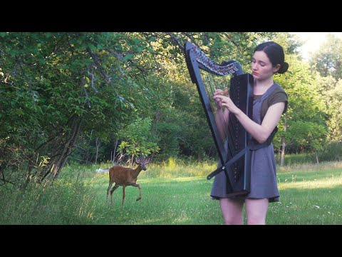 The Sound of Silence (harp cover)  |  Deer Blooper