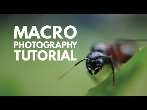 What is Macro Photography? Macro Photography Tutorial and Demonstration