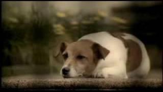 Comercial da Santa Casa - Cachorro