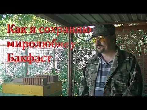 Как я сохраняю миролюбие у Бакфаст