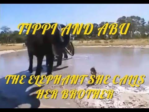 TIPPI & ABU, HER ELEPHANT BROTHER