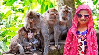 Парк Обезьян. Весёлые обезьяны играются и купаются в бассейне. Обезьянки везде.