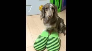 日頃から犬は色んなことでストレスが溜まる!そんなベアの仕返し方法とは!