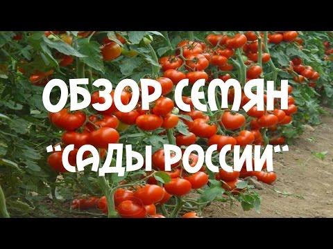 """Посылка НПО """"Сады России"""" Заказ семян томатов"""